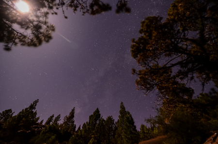 Stars in the Sky at Night over the Trees of a Pine Forest photo