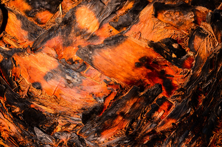 Macro of a Palm Tree Trunk Texture Background photo