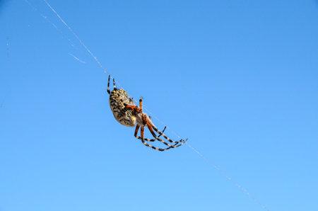arachnophobia animal bite: 4a8820e1-5c3a-4b0f-84c9-3cee75f52104