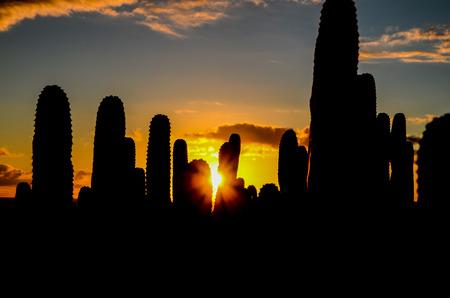 Calm Cactus Desert Sunset in Tenerife Canary Island photo