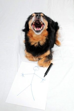 annoyance: One Female Old Black Dog Drawing on a White Paper Stock Photo