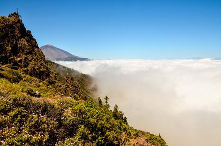 Pine cone: Hautes Nuages ??sur Pine Cone arbres forestiers � l'�le de Tenerife