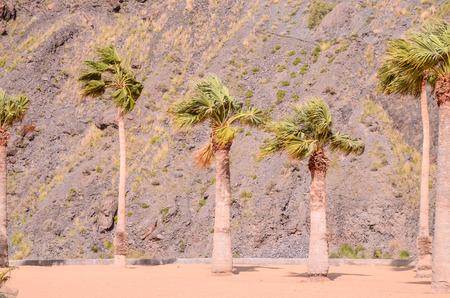 palapa: Teresitas Beach in Tenerife, Canary Islands, Spain