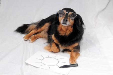 One Female Old Black Dog Drawing on a White Paper photo