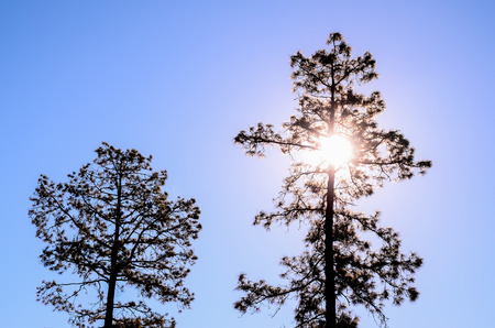 Picture of The Backlight Tree Silhouette over a Blue Sky photo