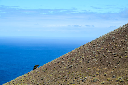 gnarled: Gnarled Juniper Tree Shaped By The Wind at El Sabinar, Island of El Hierro Stock Photo