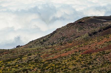 pomme de pin: High Clouds over Pine Cone Trees Forest in Tenerife Island Banque d'images