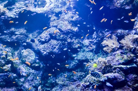 tropical acquarium: Picture of aTropical Aquarium Fish Tank Underwater View