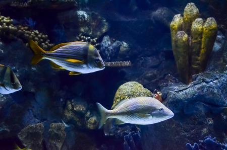 fish tank: Imagen de aTropical Acuario Submarino Ver Foto de archivo