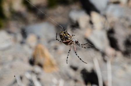 arachnophobia animal bite: 820edff2-2054-4fab-b7f7-e1f46544924b Stock Photo