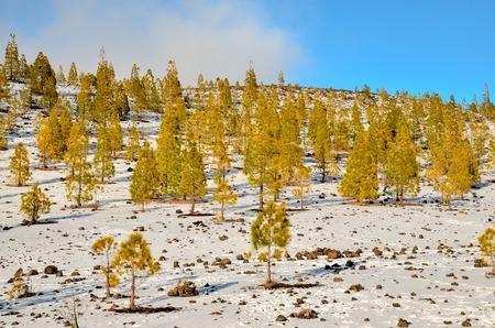 paysage hiver: Paysage d'hiver sur le Range Haute Montagne