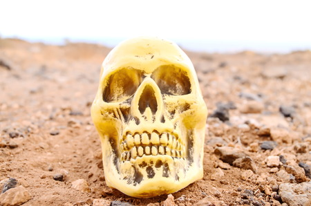 Abandoned Human Skull in the Rock Desert photo