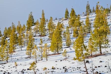 Winter Landscape on the High Mountain Range photo