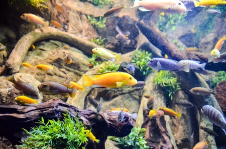 tropical acquarium: Picture of aTropical Aquarium Fish Tank Underwater View