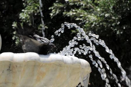 Water Splashing out of a Marble Fountain and Pigeon in Santa Cruz de Tenerife, Spain photo