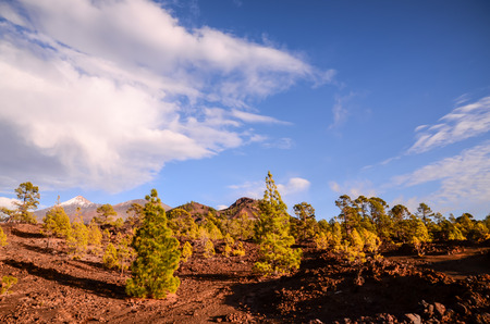 Teide National Park in Tenerife at Canary Islands photo