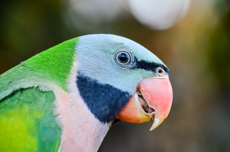 green parrot: Parrot Tropical Bird with a Colroed Father
