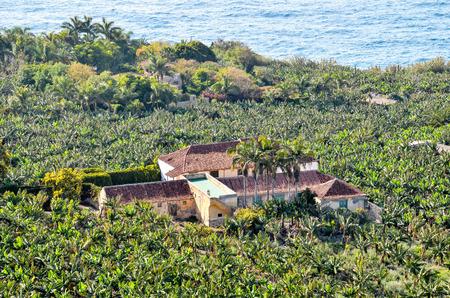Banana Plantation Field in the Canary Islands photo