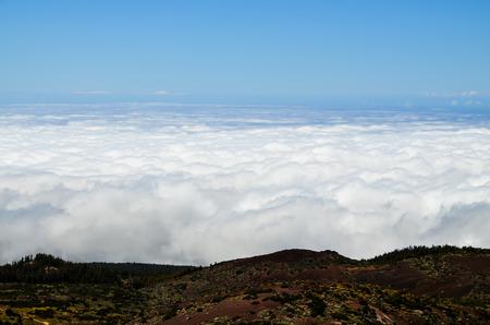 pomme de pin: Hautes Nuages ??sur Pine Cone arbres forestiers � l'�le de Tenerife