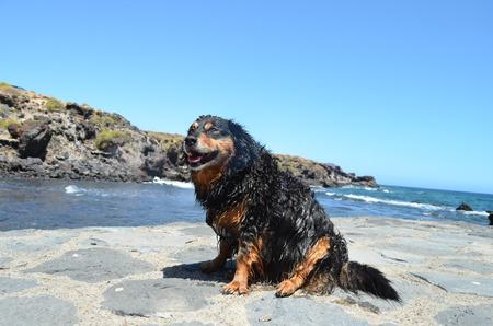 frisky: Wet Black Dog near a Beach on The Atlantic Ocean