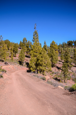 disappears: Long Straight Dirt Desert Road disappears into the Horizon in Gran Canaria Spain