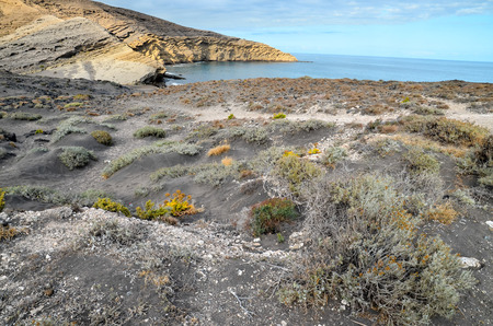canary: Volcanic Rock Basaltic Formation in Canary Islands