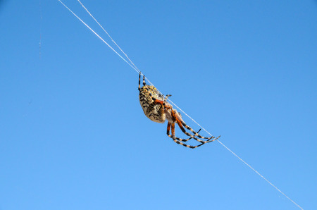arachnophobia animal bite: Big Insect Spider and Web into the Wild Stock Photo