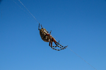 arachnophobia: Big Insect Spider and Web into the Wild Stock Photo