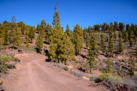 4wd: Long Straight Dirt Desert Road disappears into the Horizon in Gran Canaria Spain