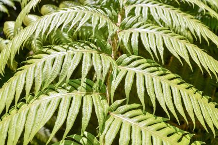 feuille arbre: Picture Photo de Leaf Background Texture Motif Banque d'images