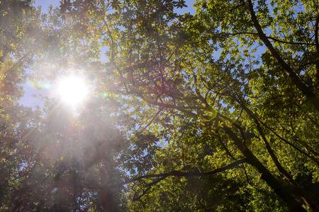 arbre feuille: Picture Photo de Leaf Background Texture Motif Banque d'images