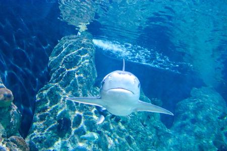 acquarium: Photo Picture an Acquarium Full of Beautiful Tropical Fishes