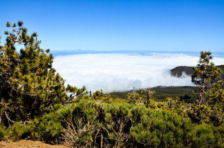 cloudscapes: High Clouds over Pine Cone Trees Forest in Tenerife Island Stock Photo