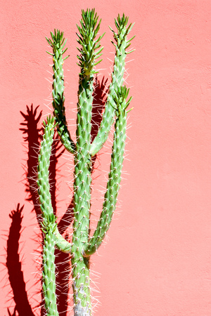 Photo Picture of a Tropical Cactus Texture Background 스톡 콘텐츠