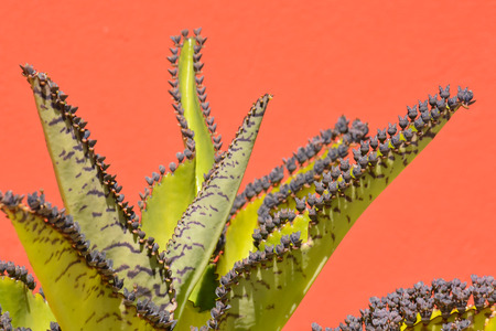 cactus: Photo Picture of a Tropical Cactus Texture Background Stock Photo
