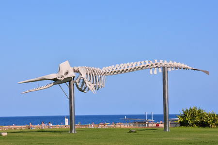 archaeologist: Photo Picture of the Dry Whale Mammal Skeleton