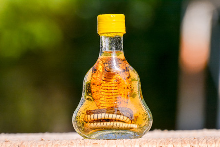 serpiente cobra: Botella de alcohol que contiene una serpiente Cobra peligroso Foto de archivo