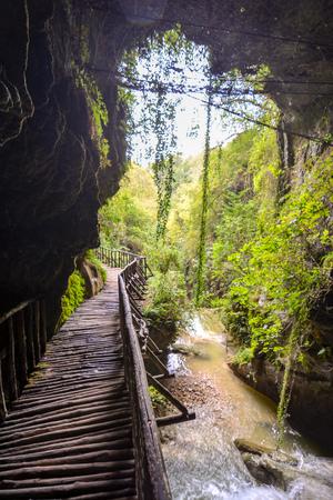 footbridge: Photo Picture of Deep Forest Pathway Wooden Footbridge Stock Photo