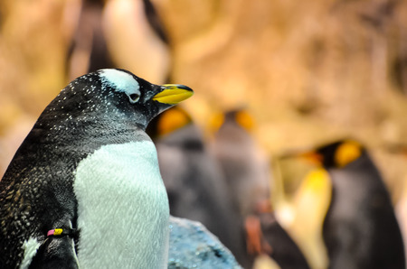polar life: Black and White Colored Penguin in a Cold Place