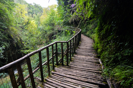 Footbridge: Picture of Deep Forest Pathway Wooden Footbridge