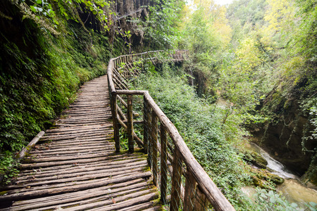 pathway: Photo Picture of Deep Forest Pathway Wooden Footbridge Stock Photo