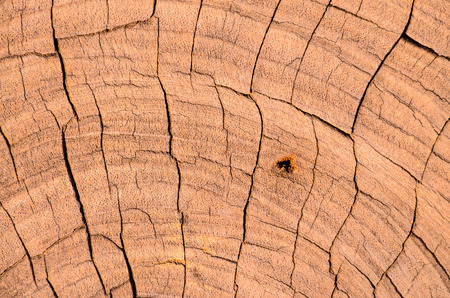 wood surface: Brown Dry Wood Surface Texture Pattern Background Stock Photo