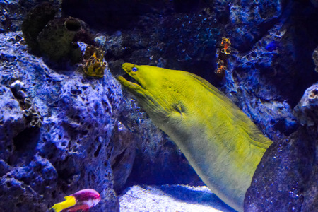 saltwater eel: Photo Picture an Acquarium Full of Beautiful Tropical Fishes