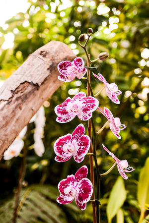 orchidea: Photo Picture of Beautiful Blooming Flower Background Stock Photo