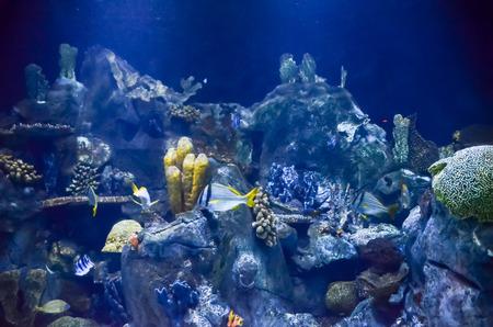 fish tank: Picture of aTropical Aquarium Fish Tank Underwater View