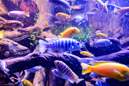 tropical acquarium: Photo Picture an Acquarium Full of Beautiful Tropical Fishes