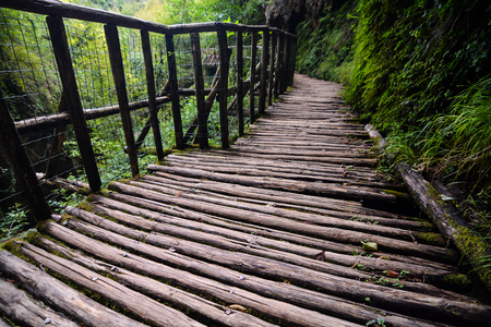 Footbridge: Photo Picture of Deep Forest Pathway Wooden Footbridge Stock Photo