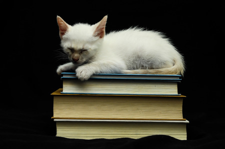 drunk test: White Young Baby Cat on a Black Background