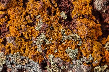 lichen: Lichen Texture Pattern Background on the Floor