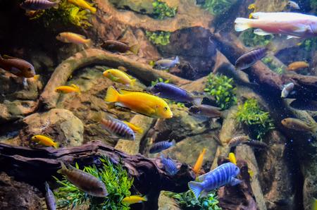 acquarium: Picture of aTropical Aquarium Fish Tank Underwater View